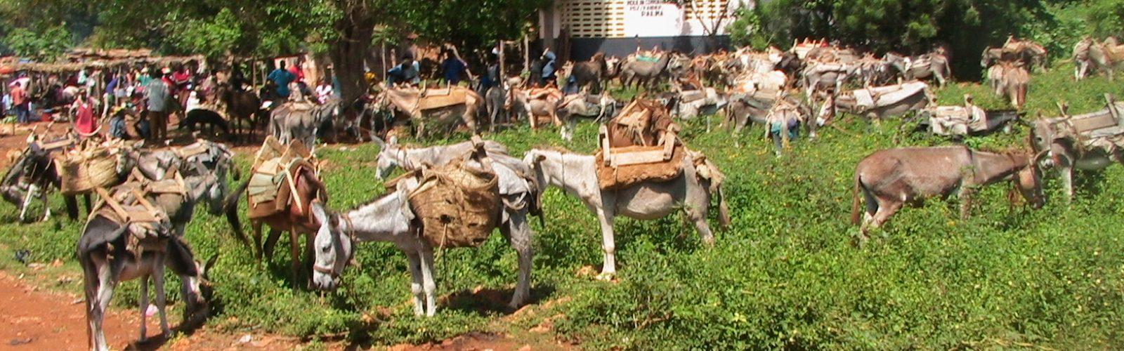 c-ânes au marché de Palma (08-2007)